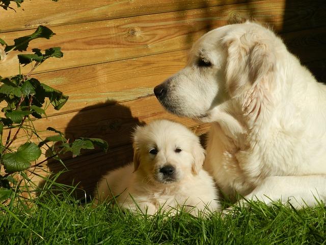 štěně u mámy